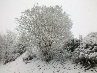 まさかの大雪
